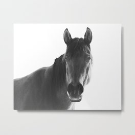 Horse with White Background Metal Print