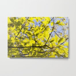 flowers and leaves of oak Metal Print
