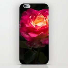 A Rose for Love iPhone Skin