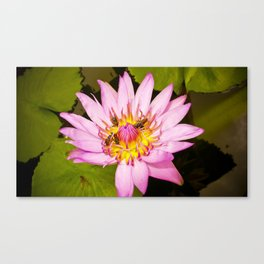 Lotus Flower and Bees Canvas Print