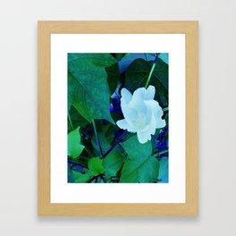 Cotton Blossom Framed Art Print