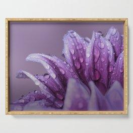 Gerbera. Flower Macro Serving Tray