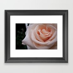 Rose 2 Framed Art Print