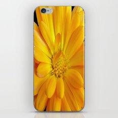Macro Marigold iPhone & iPod Skin