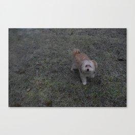Snowy Puppy Paws, Ft. Lily - Silverdale, Washington Canvas Print