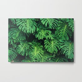 Monstera leaf jungle pattern - Philodendron plant leaves background Metal Print