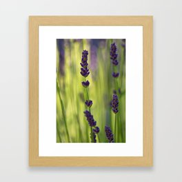 lavender 1 Framed Art Print