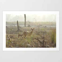 Chittel Deer and her fawn Art Print