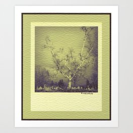 Birch: Early Spring Art Print
