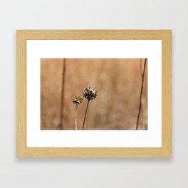Seeds after Drought Framed Art Print