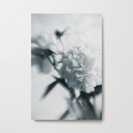 White peoinies Metal Print