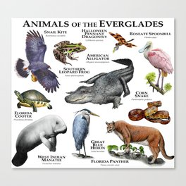 Animals of the Florida Everglades Canvas Print