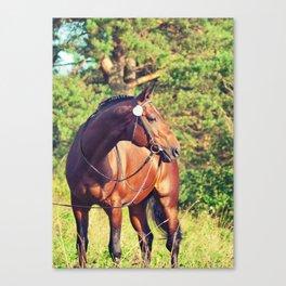 sportive horse Canvas Print