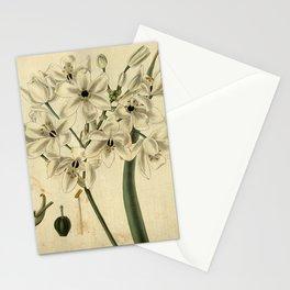 Flower 3179 ornithogalum corymbosum Peruvian Star of Bethlehem1 Stationery Cards