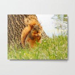 Squirrel Eating Chip Metal Print