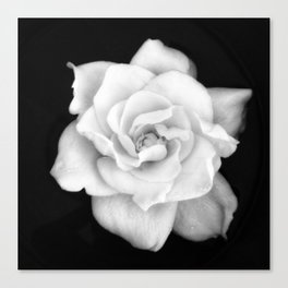 Gardenia Black and White Canvas Print