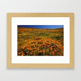 California Poppies Framed Art Print