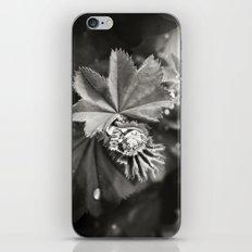 Secret Garden ~ No.11 iPhone & iPod Skin