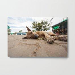 street dog Metal Print