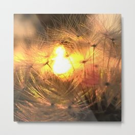 Dandelion Sunrise Wish Metal Print