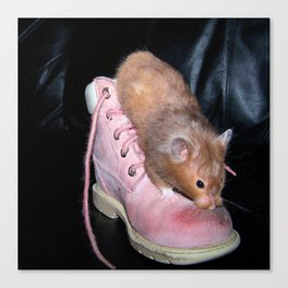 The Old Hamster in the Shoe Canvas Print