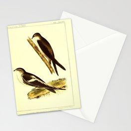 049 panyptila melanoleuca chaetura vauxii9 Stationery Cards