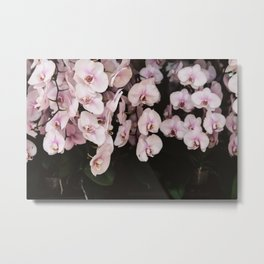 Orchids in Hong Kong Metal Print