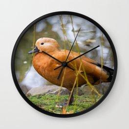 Tadorna Ferruginea Wall Clock