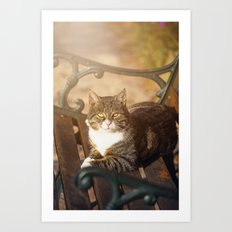 Cute cat relaxing in the sun Art Print