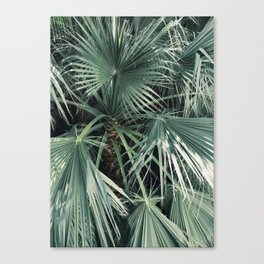Lush Palm Canvas Print