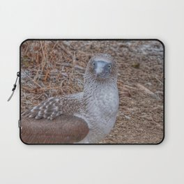 SmartMix Animal- Blue-footed Booby Laptop Sleeve