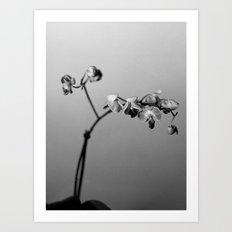 Disgruntled Orchid Art Print