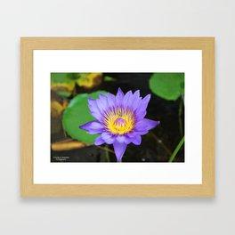 Blue Bee Framed Art Print