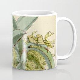 Epidendrum sophronitis Curtis' 103 (Ser. 3 no. 33) pl 6314 (1877) Coffee Mug