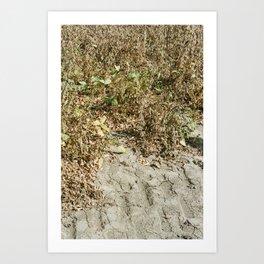 Clarksdale Soy Field Art Print