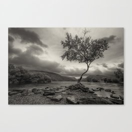 The Lonely Tree Snowdonia Wales Journey of Mountains Canvas Print