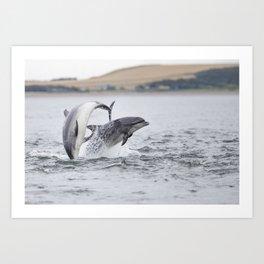 Playful couple of bottlenose dolphin tursiops truncatus Art Print
