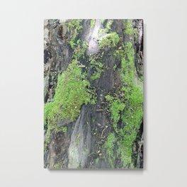 Green Moss on an Old Tree Metal Print