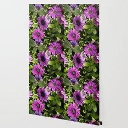 Longwood Gardens Orchid Extravaganza 38 Wallpaper