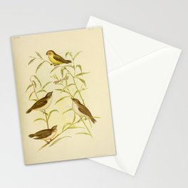 Vintage Print - The Birds of Australia (1891) - Weebills / Peep-Warblers Stationery Cards