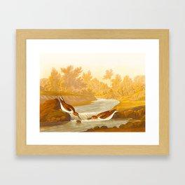 Little Sandpiper Bird Framed Art Print