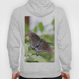 Spicebush Swallowtail Hoody