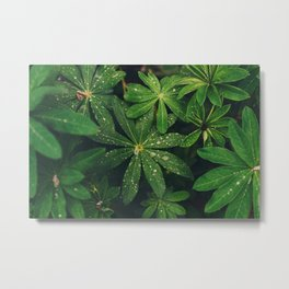 Floral Foliage Metal Print