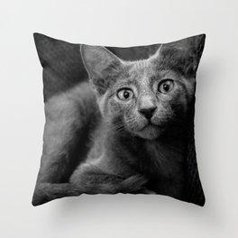 Russian Blue Kitten Portrait Throw Pillow