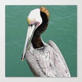 Brown Pelican Upstanding Canvas Print