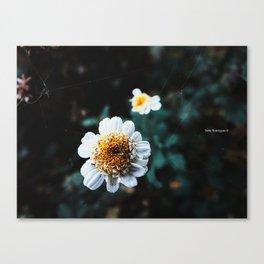 WhiteFlower Canvas Print