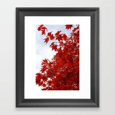 Maple Canopy Framed Art Print