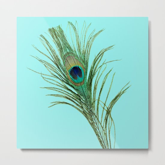 Peacock Feather on Blue Background Metal Print