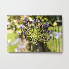 Purple Buds Metal Print