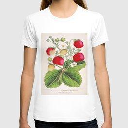 Strawberry Delights Vintage Botanical Floral Flower Plant Scientific Illustration T-shirt